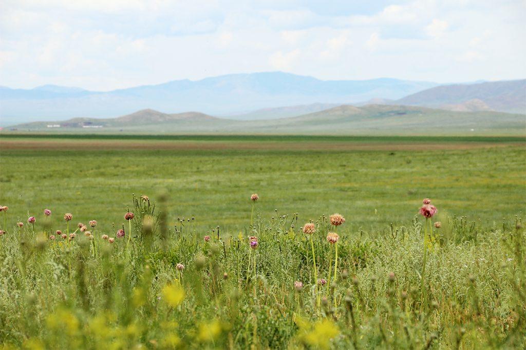 Landschaft Mongolei
