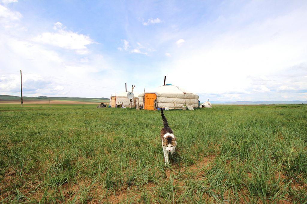 Jurte Landschaft Mongolei