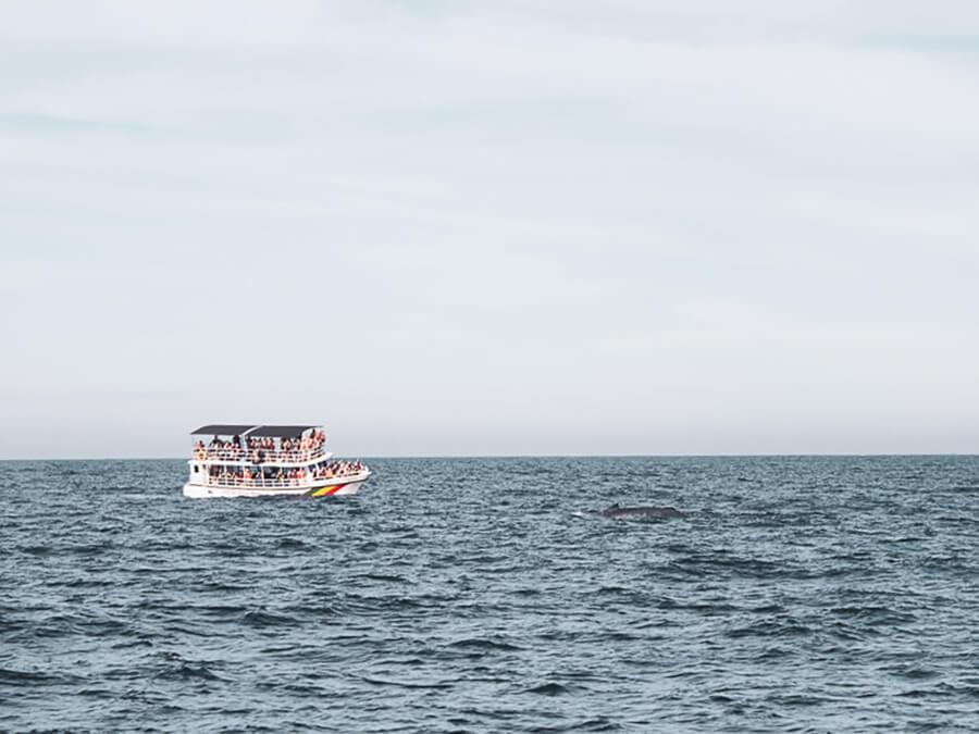 Reisebericht Sri Lanka, Wale Watching