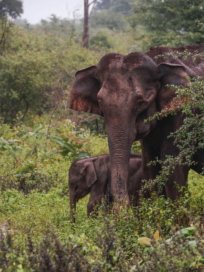 Reisebericht Sri Lanka, Elefanten Udawalawe Nationalpark