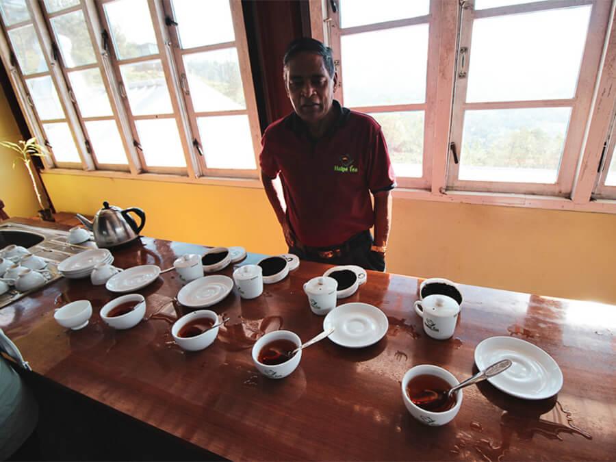 Reisebericht Sri Lanka, Halpe Tea, Tea Testing