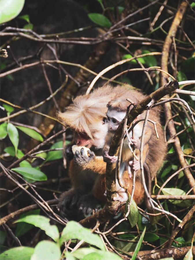 Reisebericht Sri Lanka, Monkey