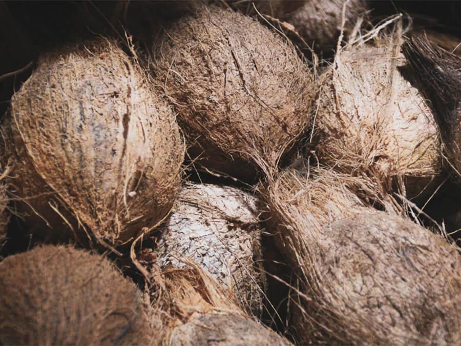 Reisebericht Sri Lanka, Kokosnüsse
