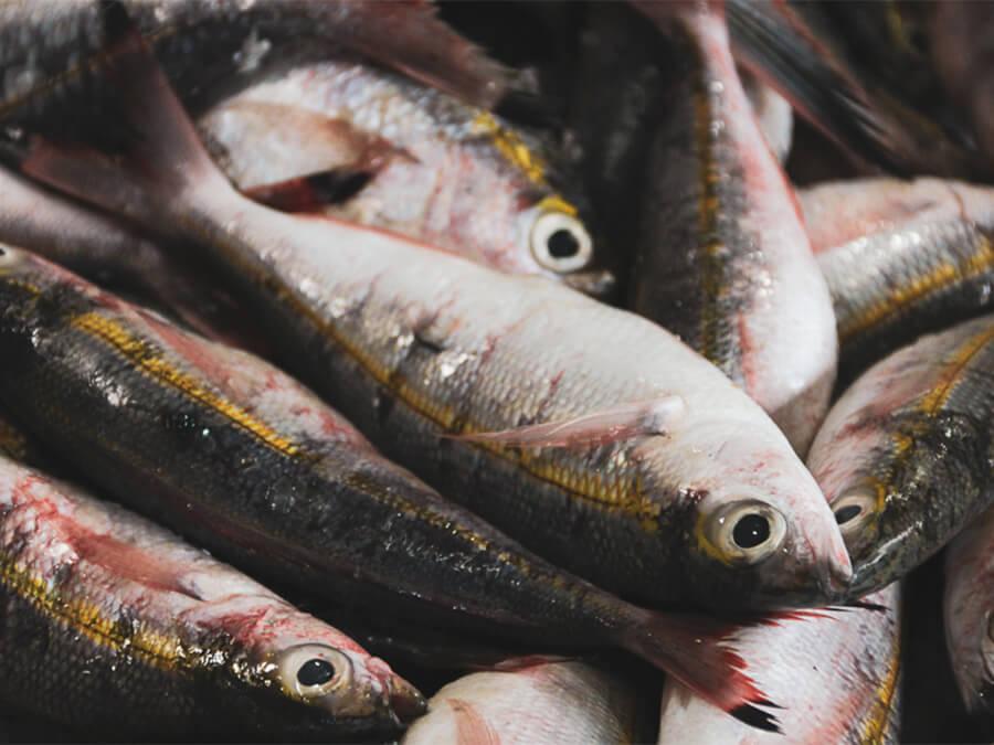 Reisebericht Sri Lanka, Fishmarket Kandy