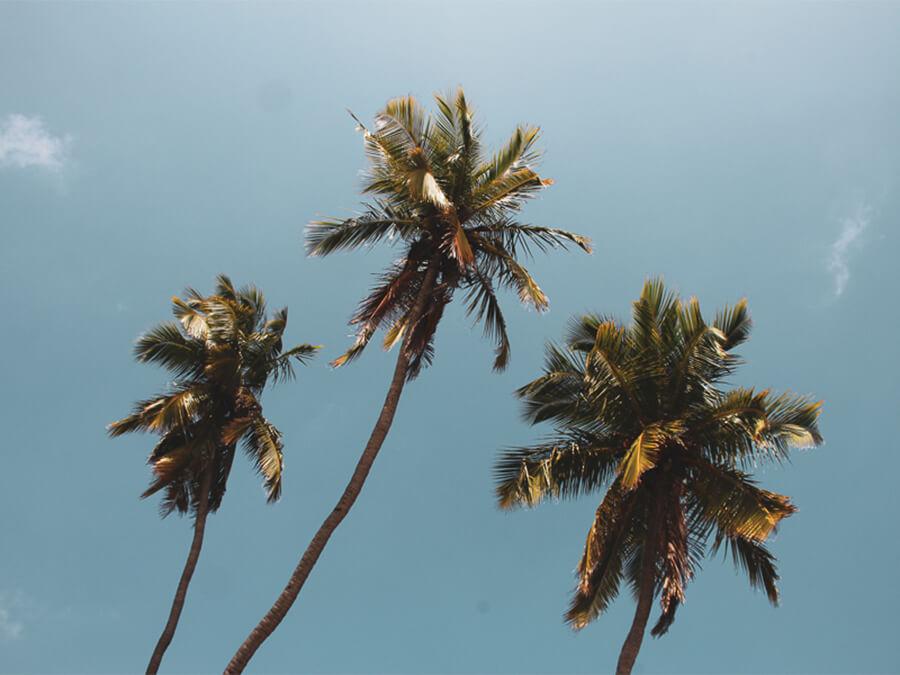 Reisebericht Sri Lanka, Palms