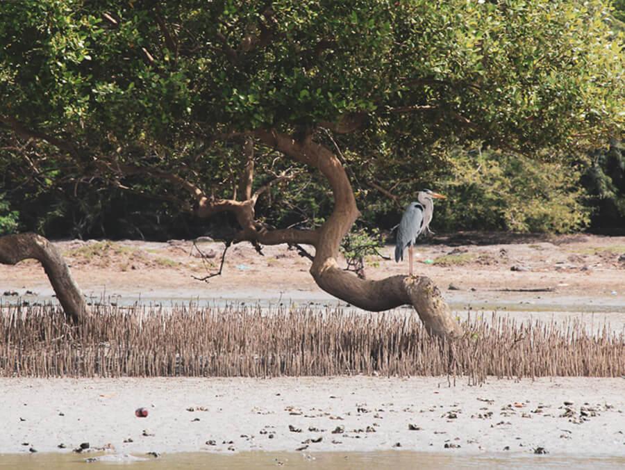 Reisebericht Sri Lanka, Fischreiher