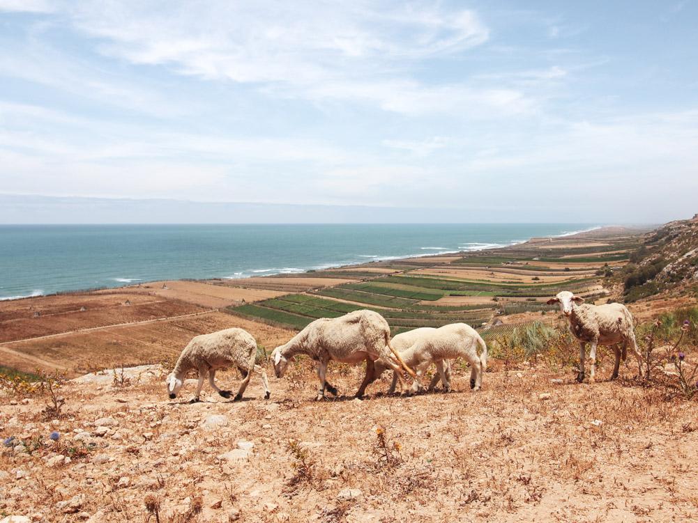 Roadtrip Marokko, Westküste Marokko