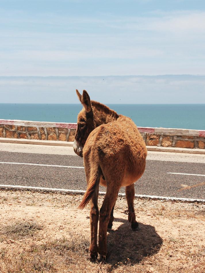 Roadtrip Marokko, Esel